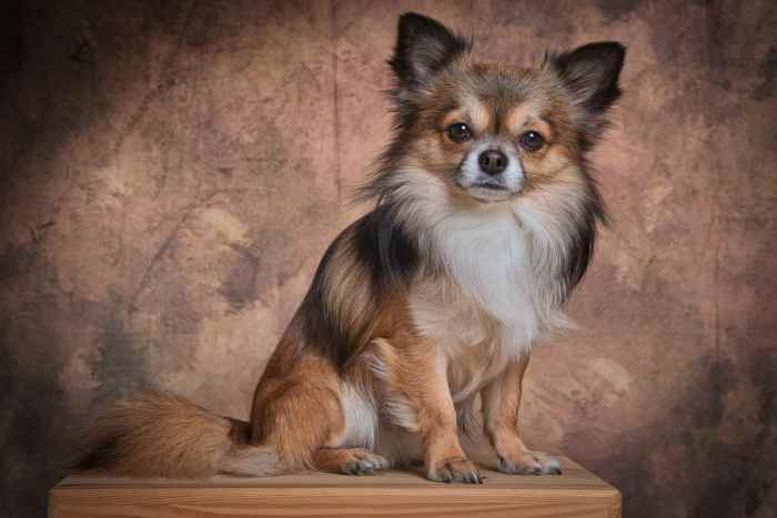 The smallest breeds of dogs