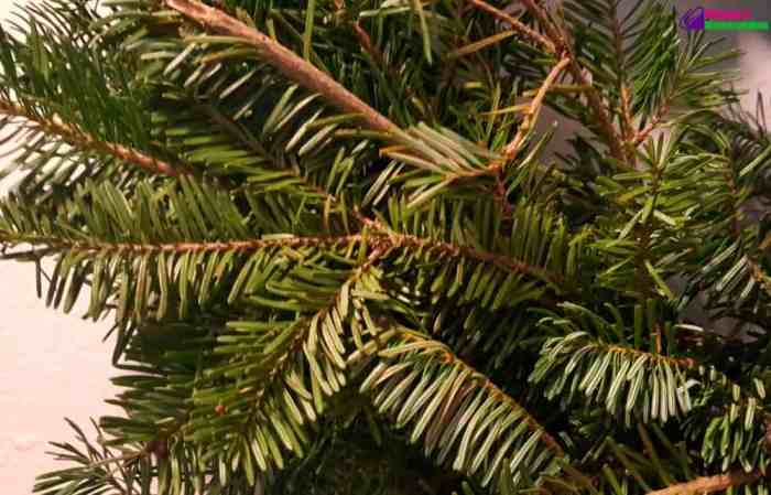 hilltop-christmas-tree-wreath-close-up