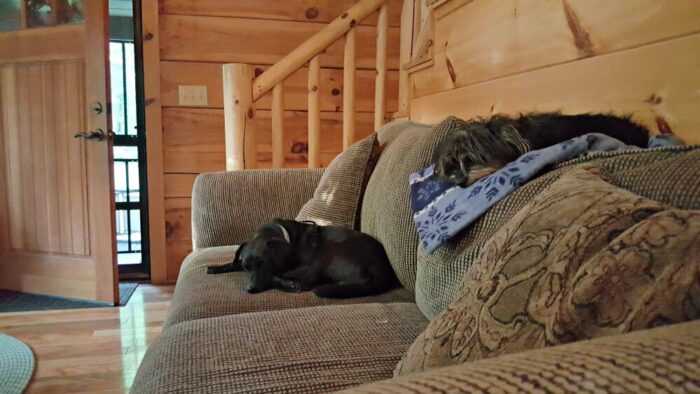 jeb and bailey mae on the couchCleaning Tips for Pets