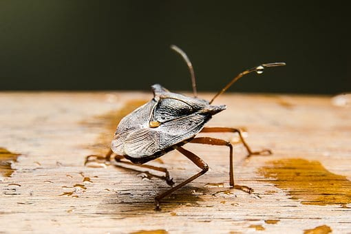 Watch Out for These Pests Come the Fall Season