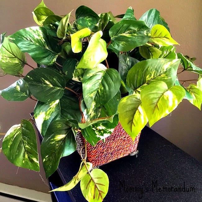 silkplantsdirect.com