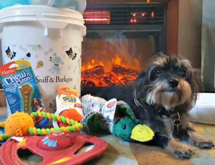 sniff and barkens holiday bucket with bailey mae in front of fireplace