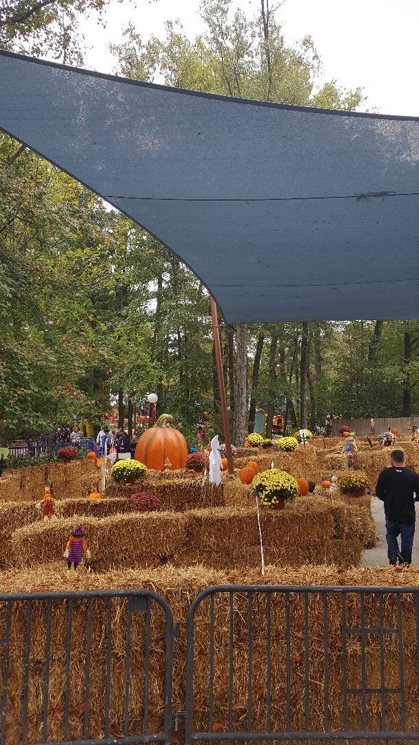 the great pumpkin fest maze