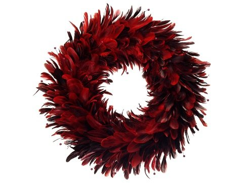 Red and Black Feather