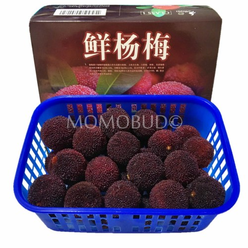 Black Chinese Bayberry