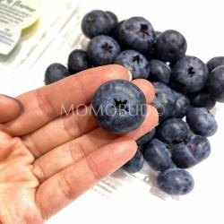 Driscoll's Jumbo Blueberry Australia 1
