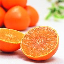 Japanese Akamadonna Orange Fresh