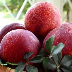 japanese-kiyou-plum