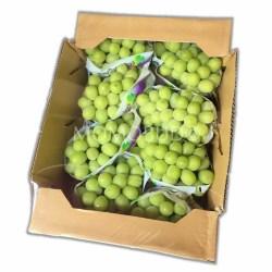 Yamanashi Shine Muscat 5kg Box