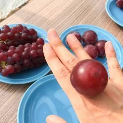 japanese-ruby-roman-grape-size