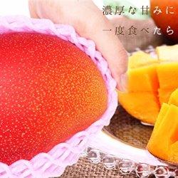 Miyasaki Kanjuku Mango 2