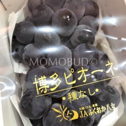 Hakata Pione Seedless Grapes