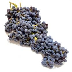 Australian Champagne Grapes