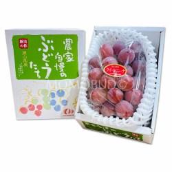 Japanese Queen Nina Grapes Gift Box