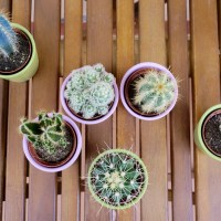 DIY | Cactus weekend project