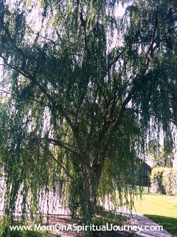 Akashic Wisdom of Trees