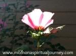 spiritual medium