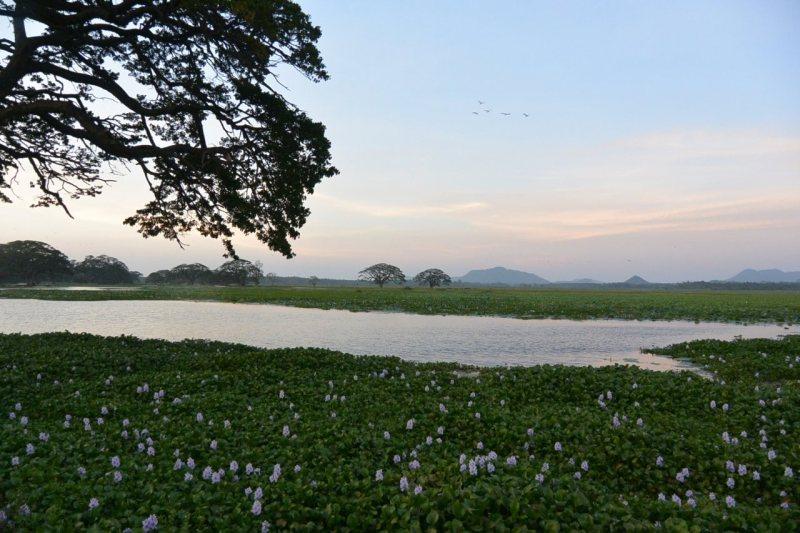 ティッサマハーラーマ貯水池の夕暮れ