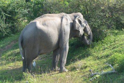 ヤーラ国立公園の象-6