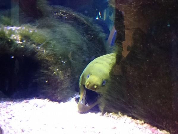 オレゴンコースト水族館-12-29-40