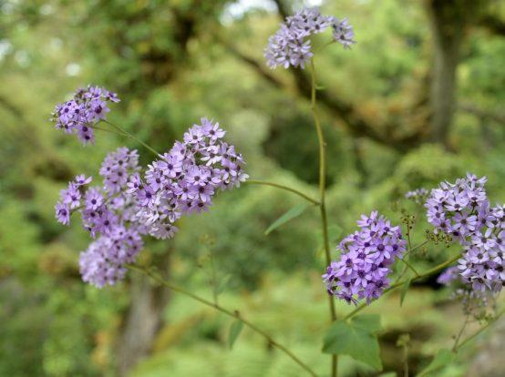 モンセラーテの花々-1