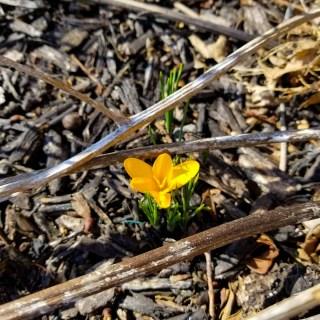 Friday Gratitude- Inspiration & Spring 3.9.18