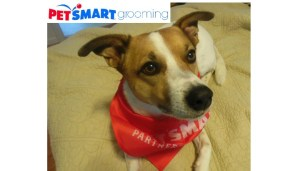 PetSmart Grooming Salon — Rosie Looks Great, and We Love the Convenience