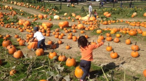 Pumpkin Patches, Fall Festivals and Spooktacular Events in Maryland and DC!