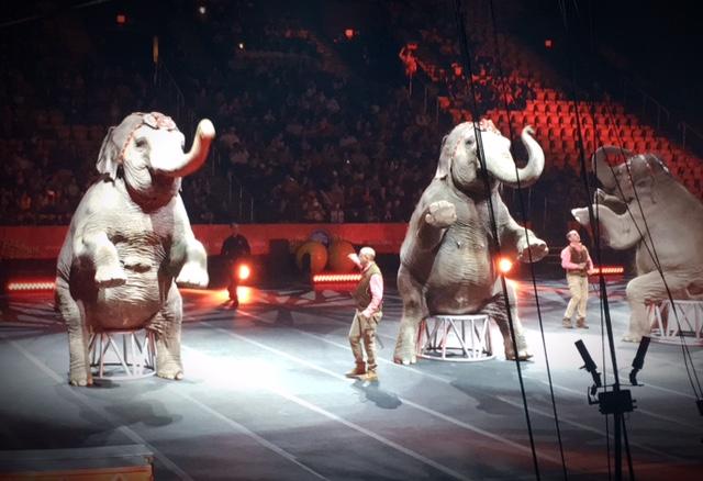 Greatest Show on Earth - Elephants