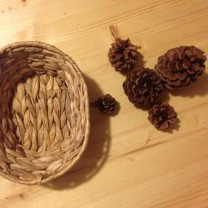 pine-cones-1