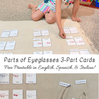 Parts of Eyeglasses 3-Part Cards -- Free Printable in English, Spanish, & Italian!