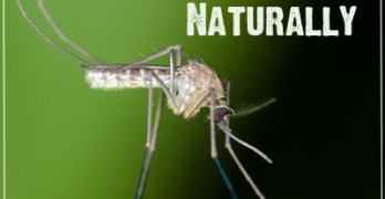 Combat Mosquitoes Naturally