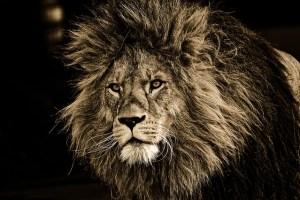 shampoing solide - mon alter éco - lion décoiffé chevelure sans maquillage silicone