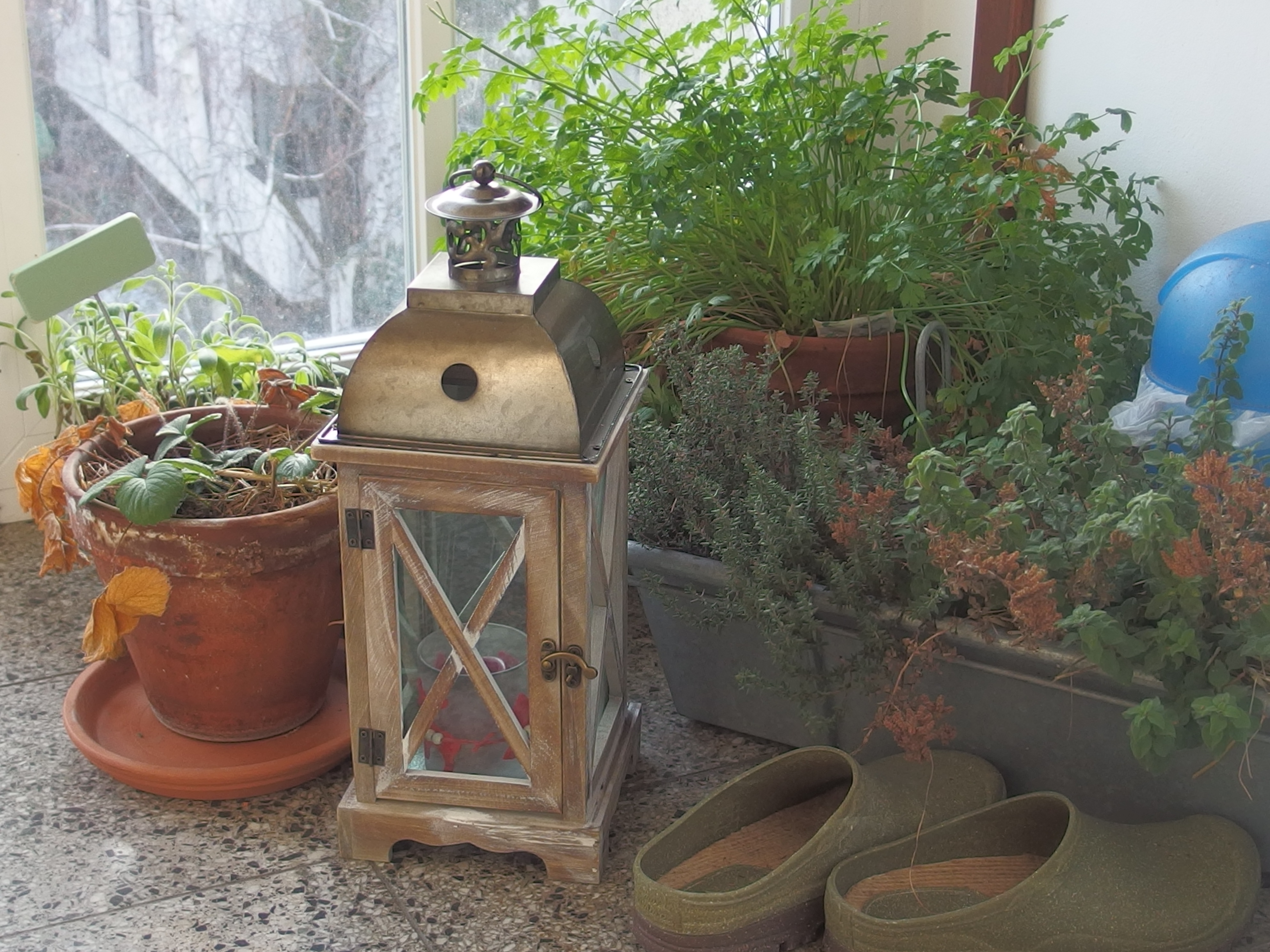 Défi balcon-jardin en janvier