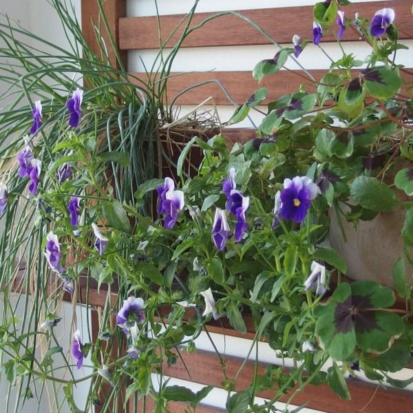 Défi balcon-jardin en juin