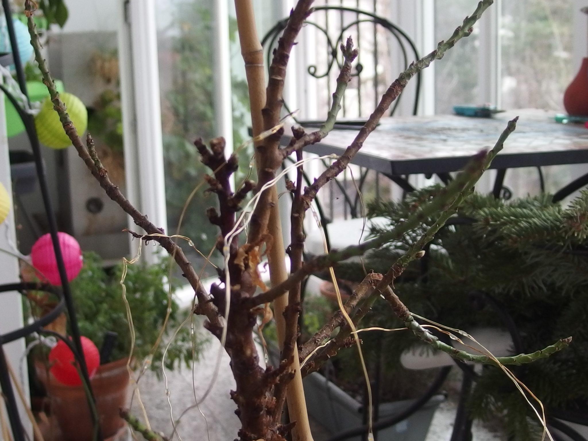 L'hiver au balcon-jardin
