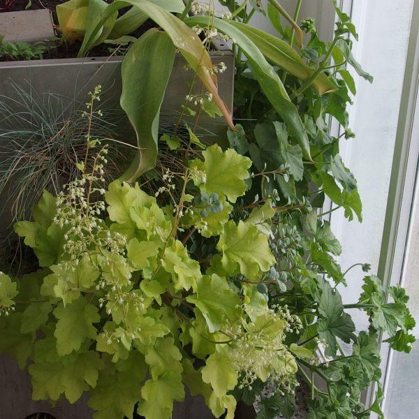 Associer les plantes sur son balcon-jardin