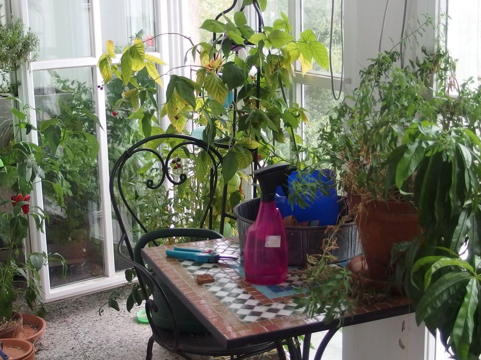 Réaménager son balcon-jardin pour l'automne