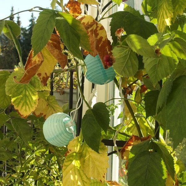Le calendrier phénologique (partie 4) : l'automne