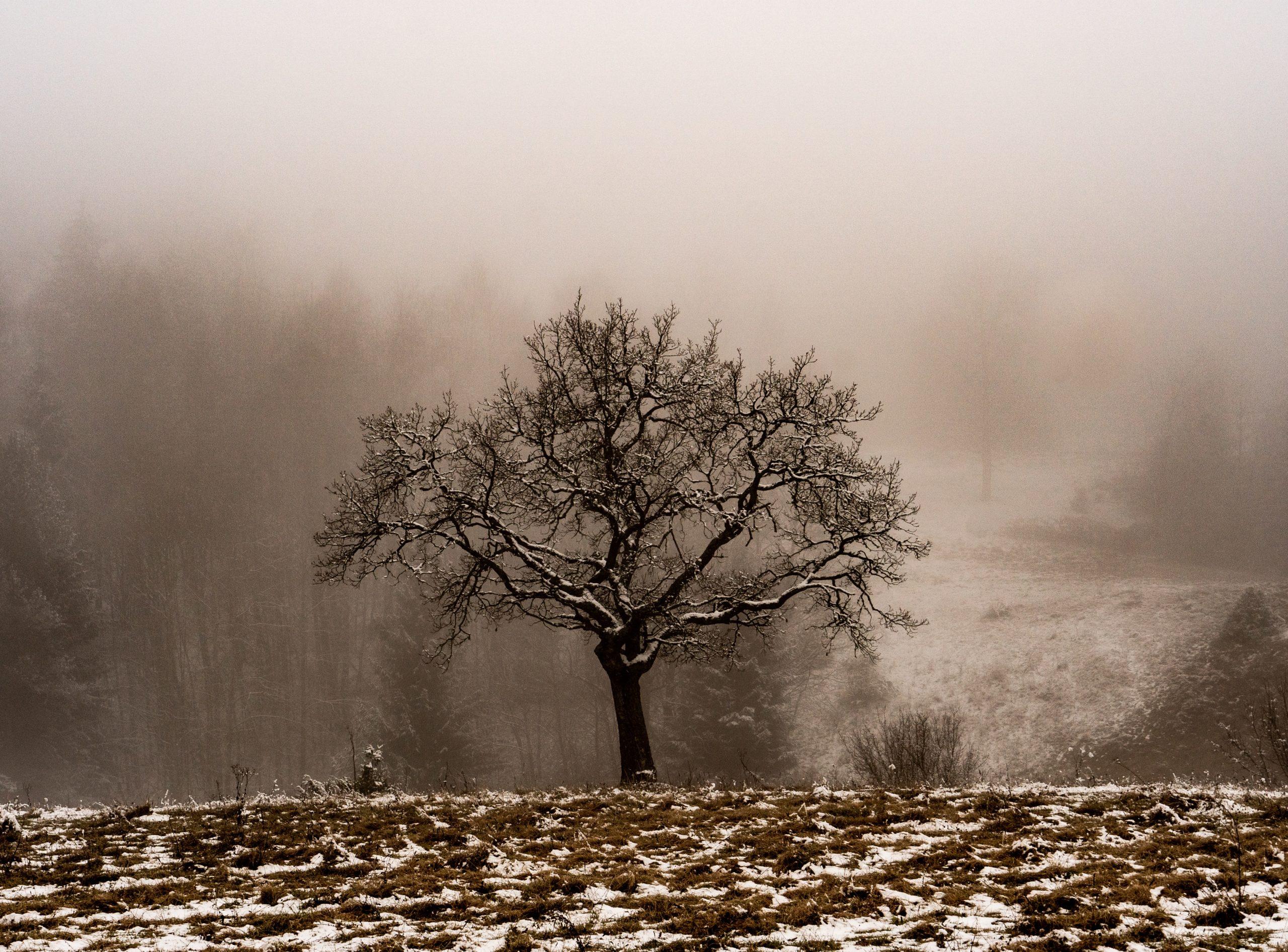 L'hiver phénologique : cinquième et dernière partie