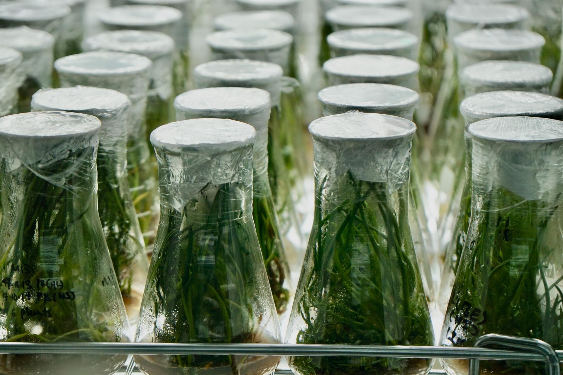 Les bienfaits du balcon-jardinage : que dit la science ?