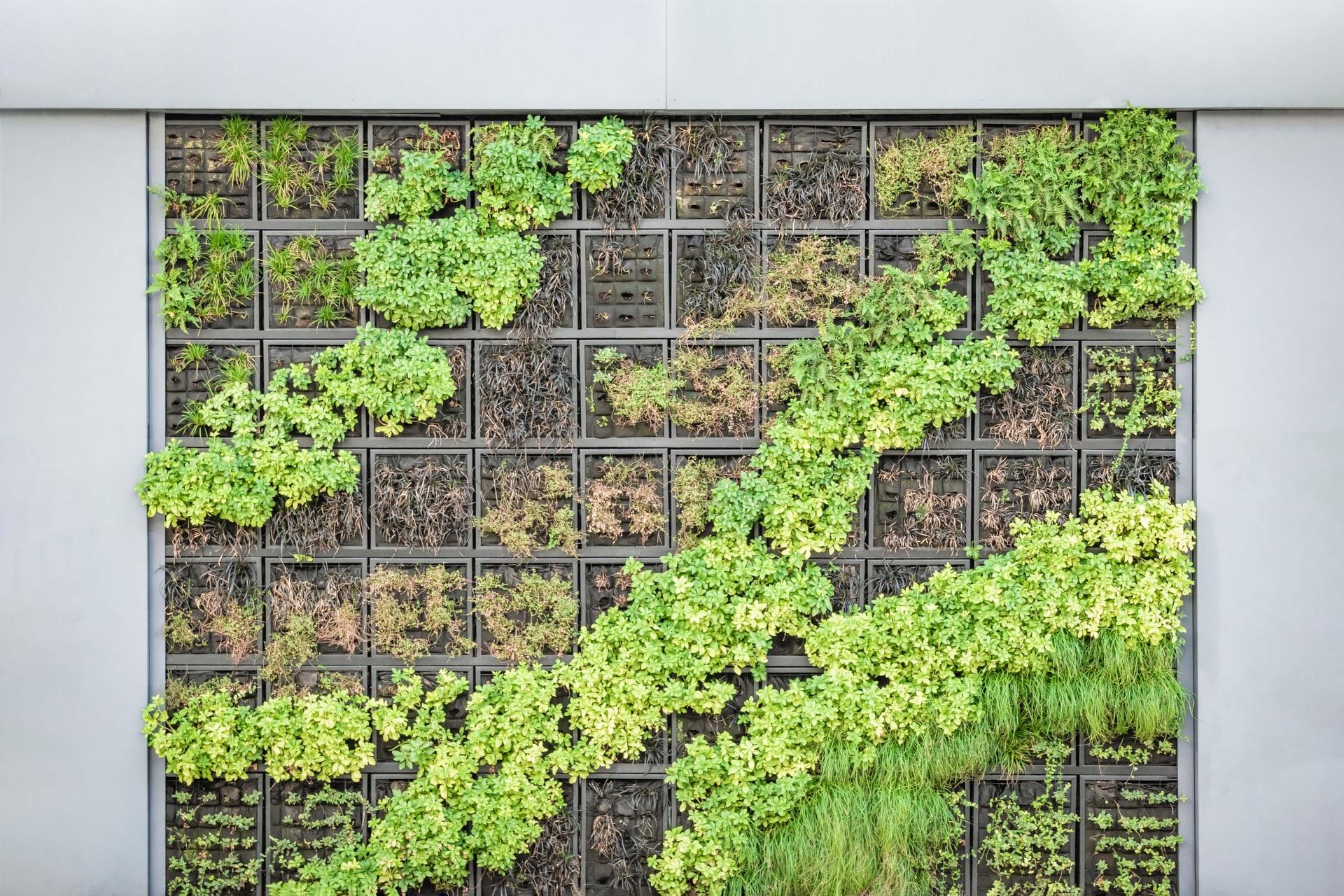 Le jardinage vertical : à l'assaut de la troisième dimension