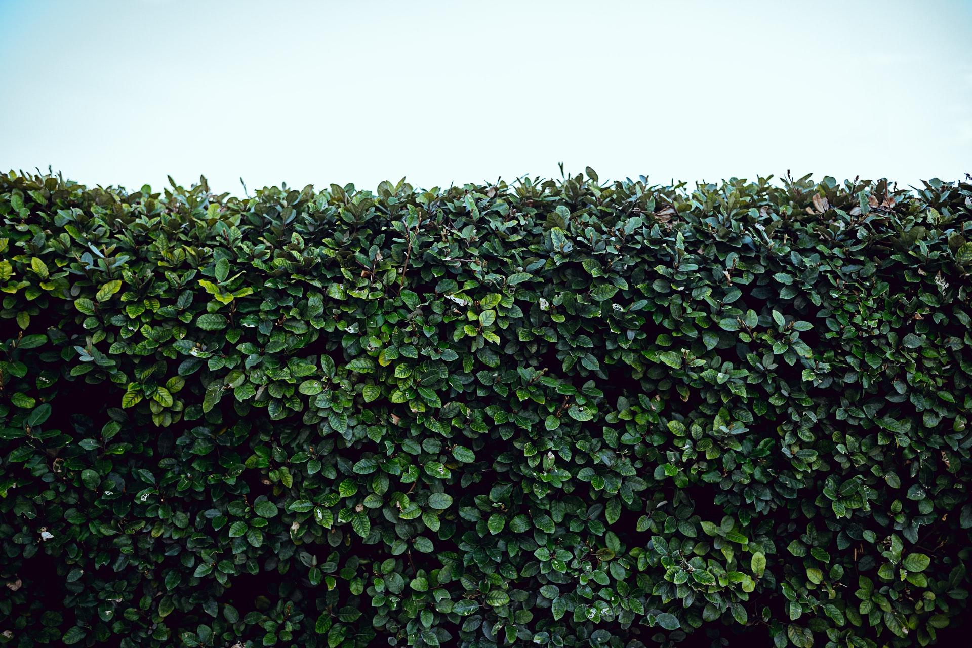 Choisir une plante brise-vue pour le balcon