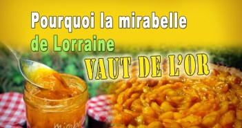 La mirabelle de Lorraine vaut de l'or ! © French Moments