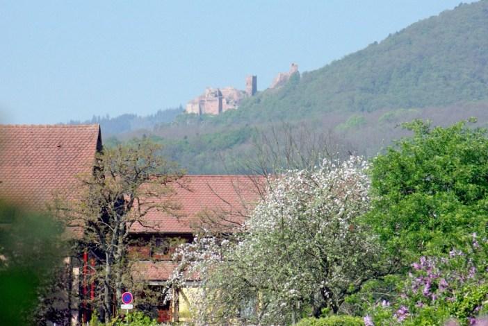 Ramparts de Bergheim