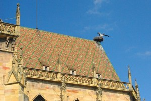 Cigogne en Alsace © French Moments