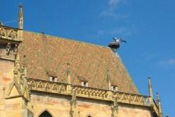 Cigogne en Alsace © French Moments