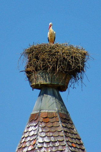 Cigogne en Alsace