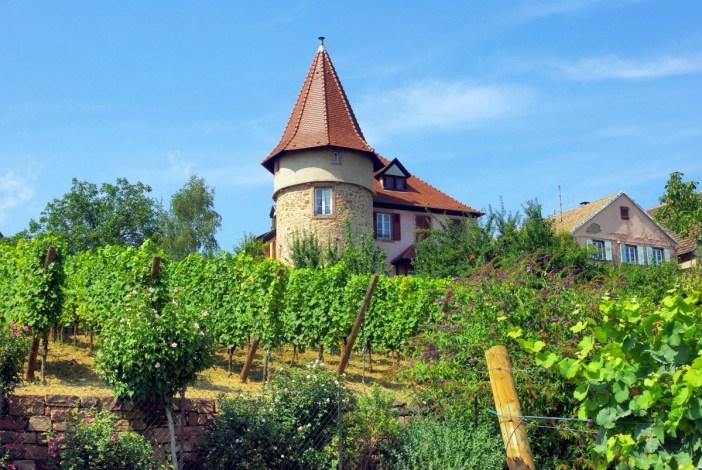 Zellenberg Alsace Haut-Rhin