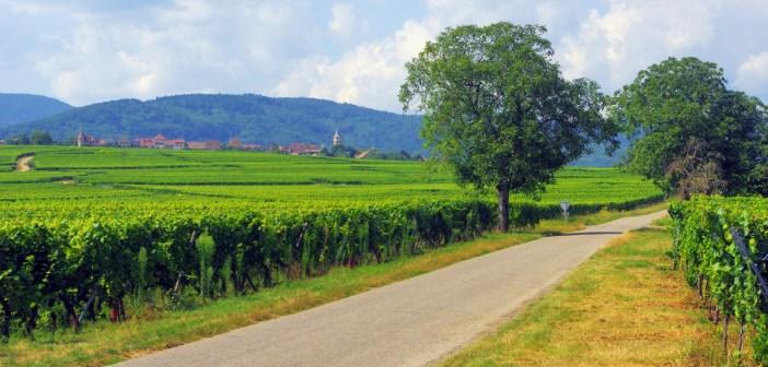 Itinéraire touristique d'Alsace - Zellenberg © French Moments